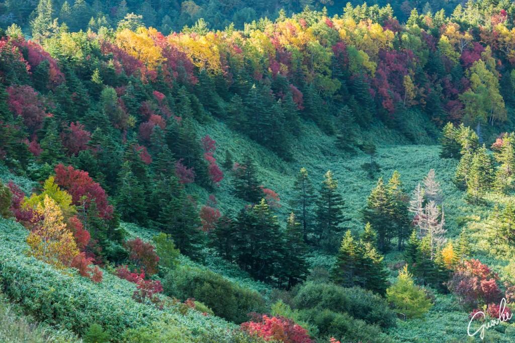 志賀高原の渋峠の紅葉は、有名撮影スポットで、多くの写真家が撮影に来ていました。