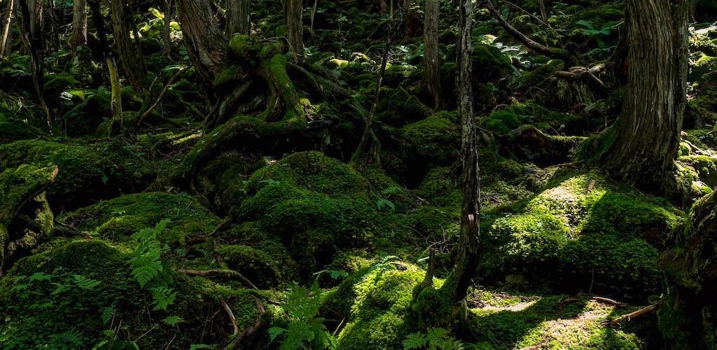 蓼科大滝は古代の雰囲気が魅力的