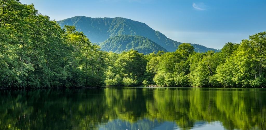 太古のブナに囲まれた神秘の池