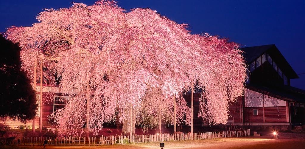 杵原学校は映画で有名な歴史的な景観があり桜のライトアップも魅力的